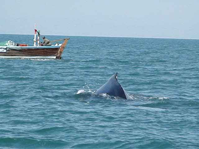 Astola Island declared Pakistan's first Marine Protected Area - Arabian Sea Whale Network
