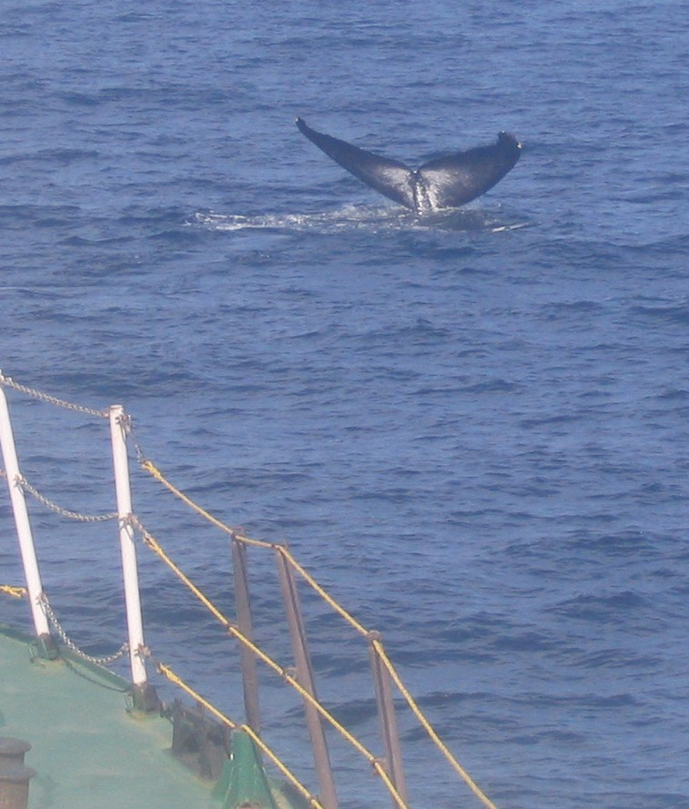 Whale Photo - 05 Oct 05 017