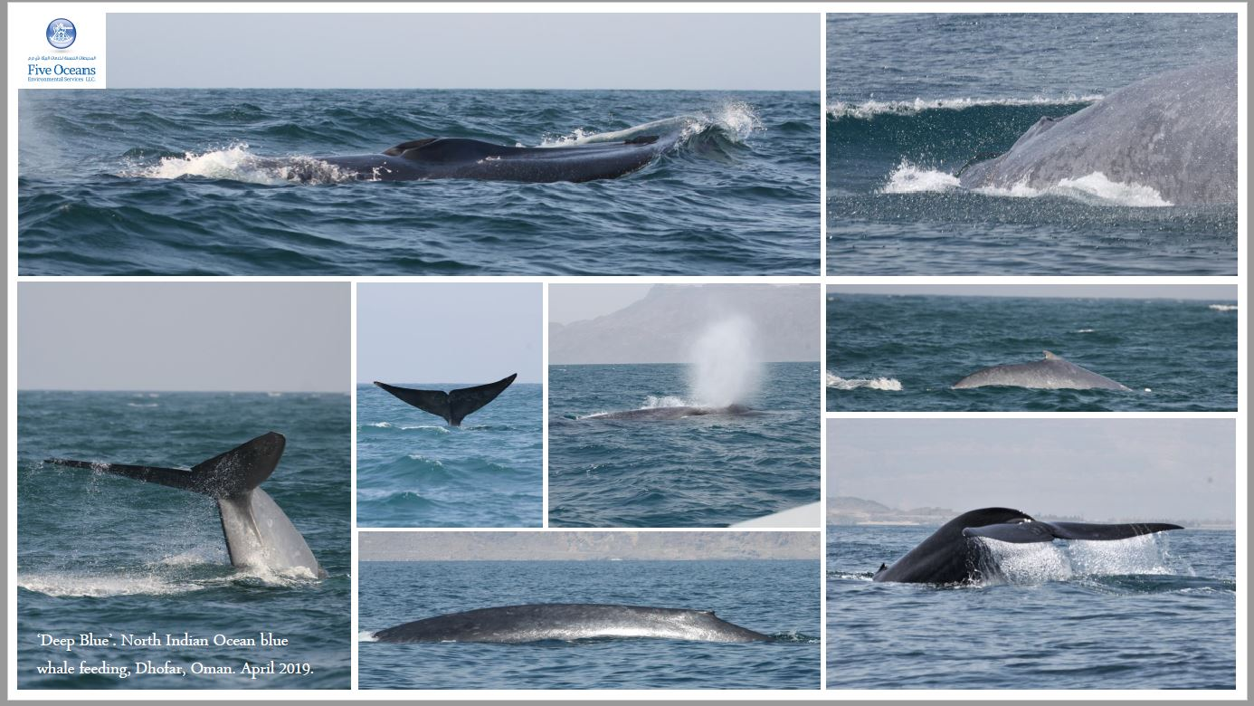 Blue whale medley April 2019